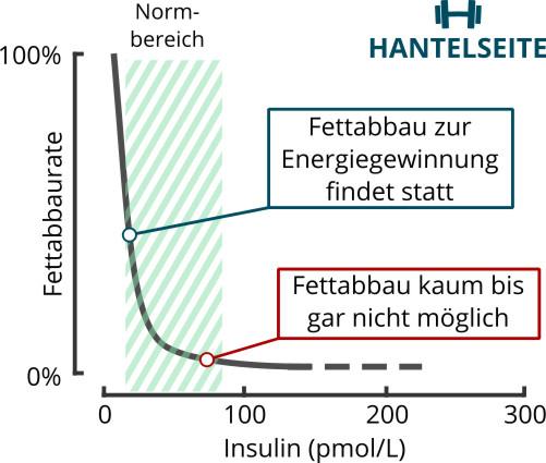 Zusammenhang von Insulin und Fettabbau/Lipolyse